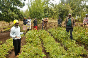Kenya to Restore Denmark-sized Area of Degraded Land
