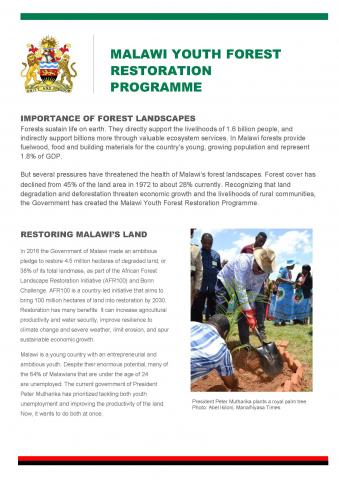 Malawi Youth Forest Programme